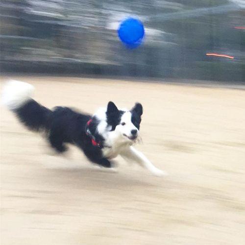 最近の朝の日課。ボール遊び