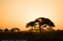 Parc national d'Amboseli, Kenya