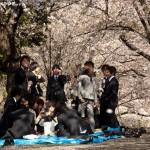 Hanami in April, Tokyo, Japan