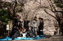 Hanami en avril, Japon