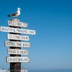 Malibu : A Way of Life, USA
