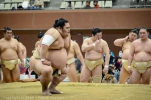 Sumo_Japan-6813