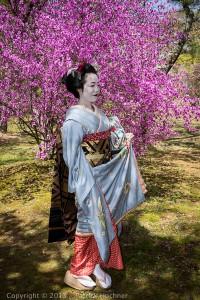 Photo taken in the cherry garden of the Ninna-Ji Temple