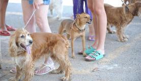 Brasileiros criam duas vezes mais cães do que gatos