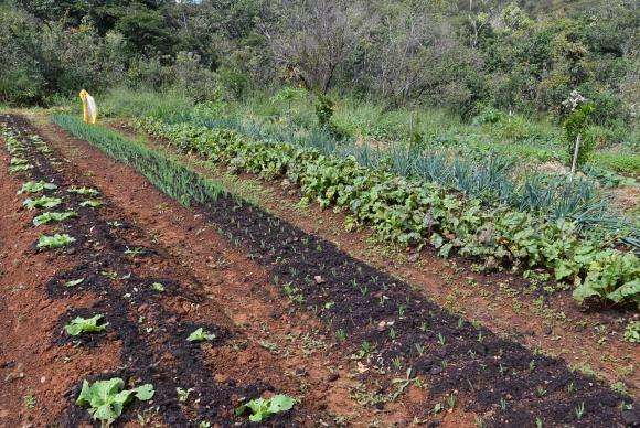 Sítio Pinheiro, na região de Brazlândia, no DF. A produção de alimentos orgânicos no sistema de agroflorestas vem ganhando destaque entre produtores rurais (Antonio Cruz/Agência Brasil)
