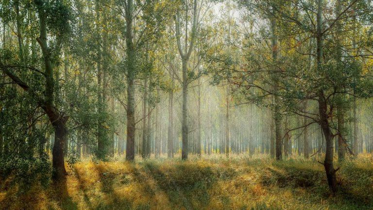 Ar - Floresta Verde