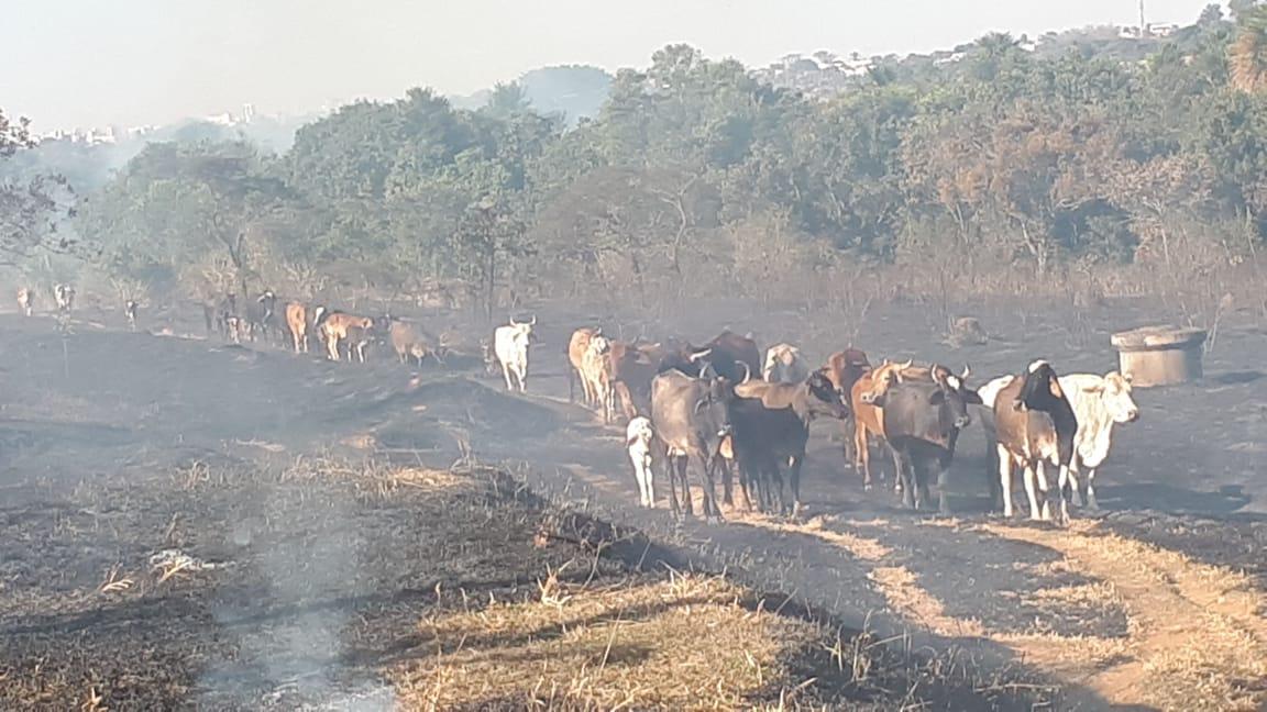 Incêndio coloca moradores e animais em risco em Uberlândia