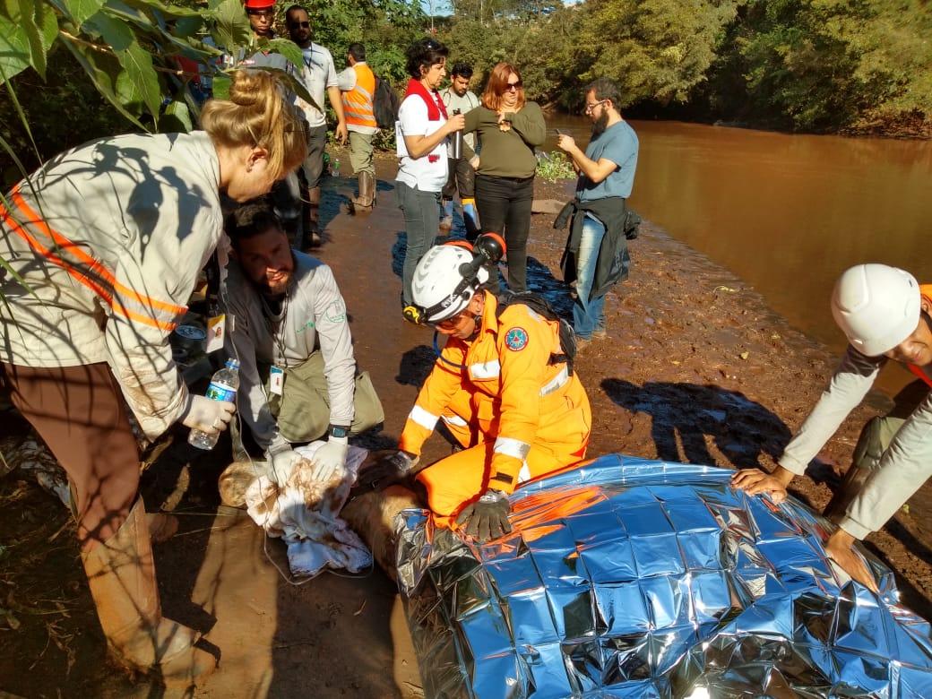 Cavalo é resgatado de helicóptero em Brumadinho