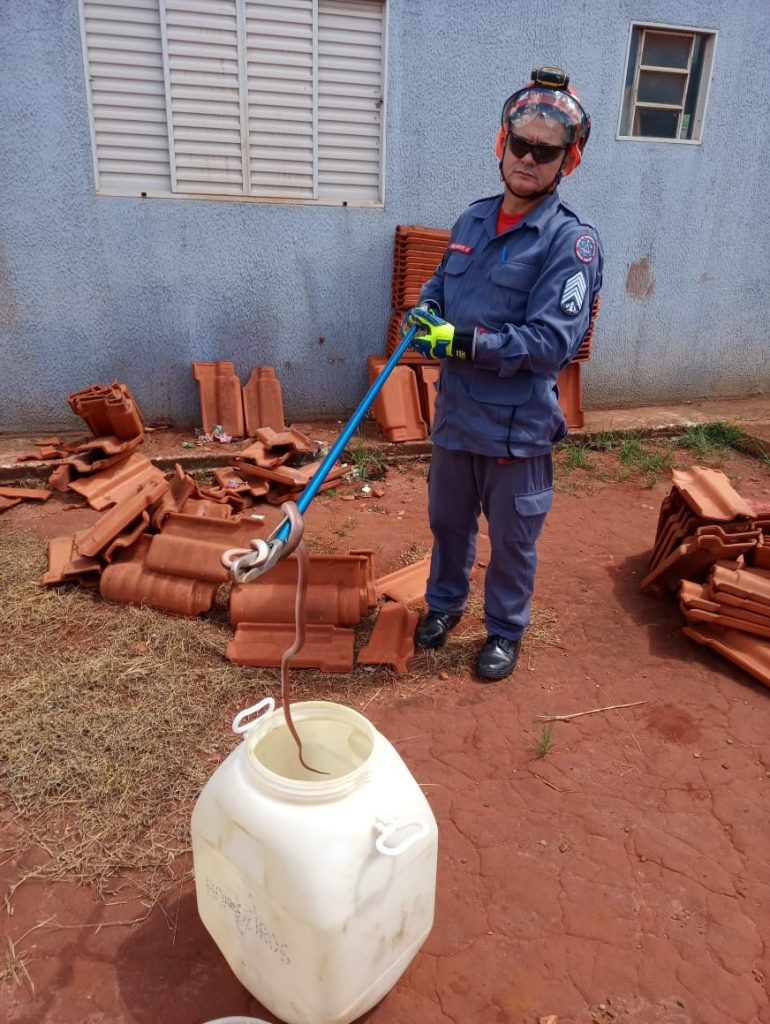 Cobra cipó é capturada em Ituiutaba-MG