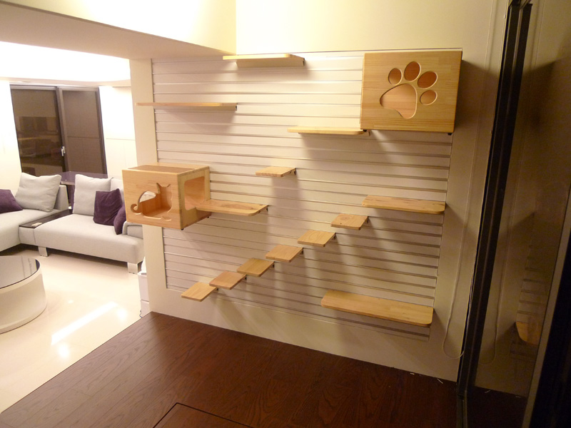 Sonho De Casa Para Gatos E Gateiros