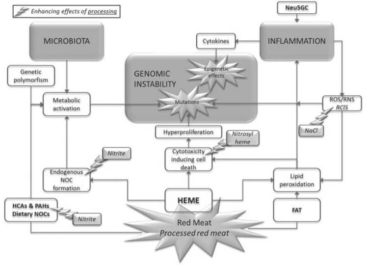 Mögliche Ursache #1: Heterozyklische Amine & Polyzyklische Aromatische Kohlenwasserstoffe (HCA-/PAH-Theorie)