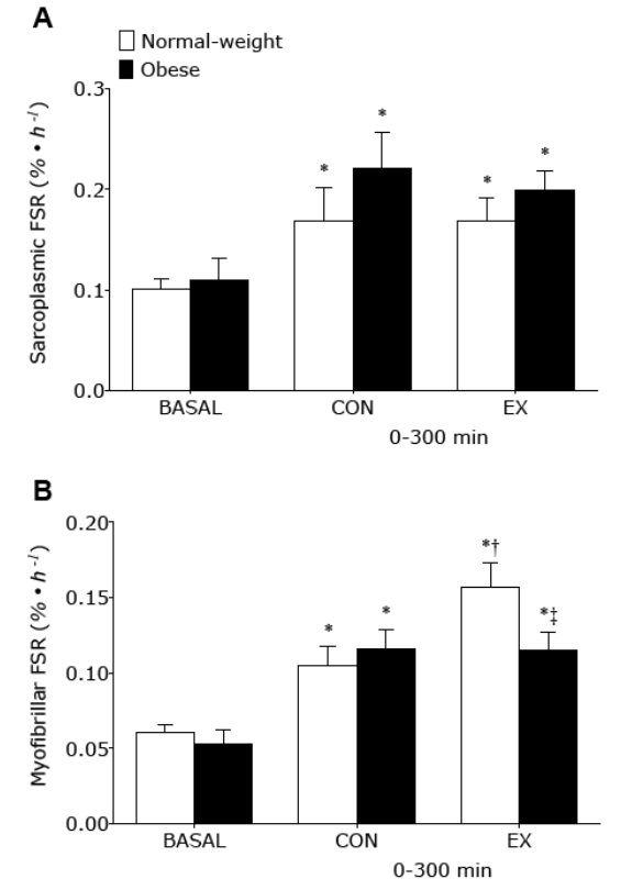 Gemessene Rate der sarkoplasmischen (A) und myofibrillären (B) Proteinsynthese (in %/Stunde) im Ausgangszustand (BASAL), im untrainierten Bein (CON) und trainierten Bein (EX). Die Messung deckt einen Zeitraum von 0-300 Minuten nach dem Verzehr des Schweinehackfleisches ab.