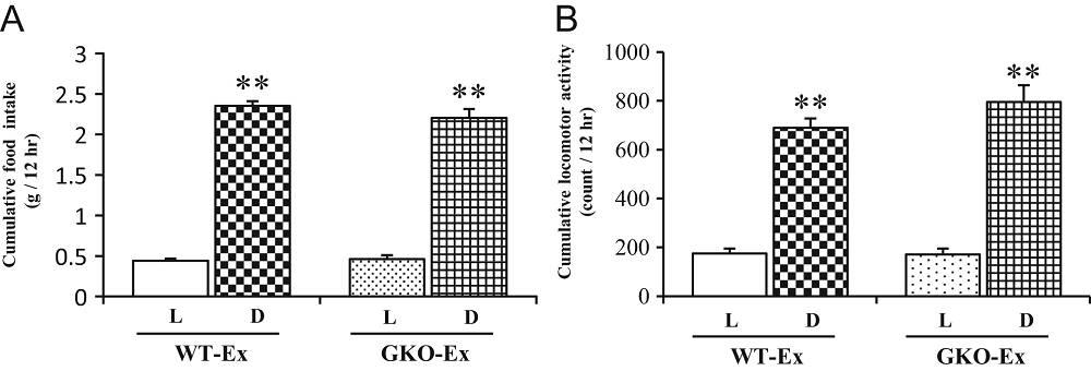Nahrungsaufnahme, körperliche Aktivität und Aktivität im Laufrad mit ad libitum Nahrungszufuhr. Die kumulative Nahrungszufuhr (A) und körperliche Aktivität (B) wurden nach Hell- (L) und Dunkelperiode gruppiert. WT-Ex = Normale, gesunde Mäuse; GKO-Ex = Mäuse, in denen Ghrelin deaktiviert wurde. WT (n = 8); GKO (n = 8); L = Helle Periode; D = Dunkle Periode. **P < 0,01 versus Lichtperiode in jedem Genotyp von Mäusen