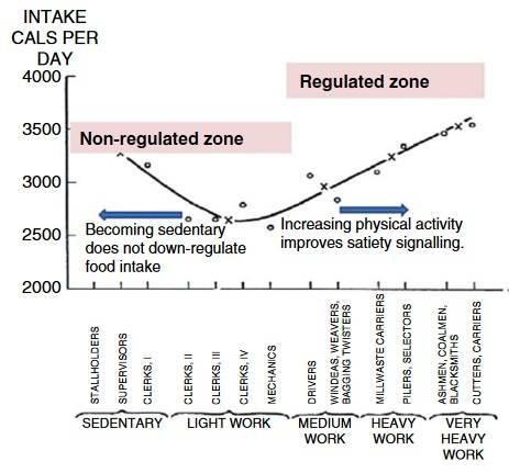 """Zusammenhangs zwischen Energieverbrauch (entsprechend den körperlichen Anforderungen der Arbeit) und Energiezufuhr (Nahrungsaufnahme). Es wird vorgeschlagen, dass die Appetitkontrolle homöostatisch reguliert wird, wenn der Energieverbrauch hoch ist, aber in der sesshaften """"unregulierten"""" Zone, in der die homöostatische Kontrolle über den Appetit schwach ist, dysreguliert wird, wodurch ein Kalorienüberschuss kreiert wird."""