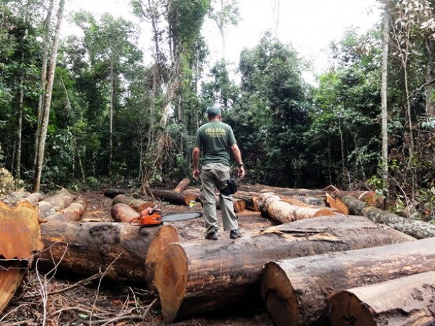 MPF no Pará pede operação urgente em terra indígena ameaçada por madeireiros ilegais