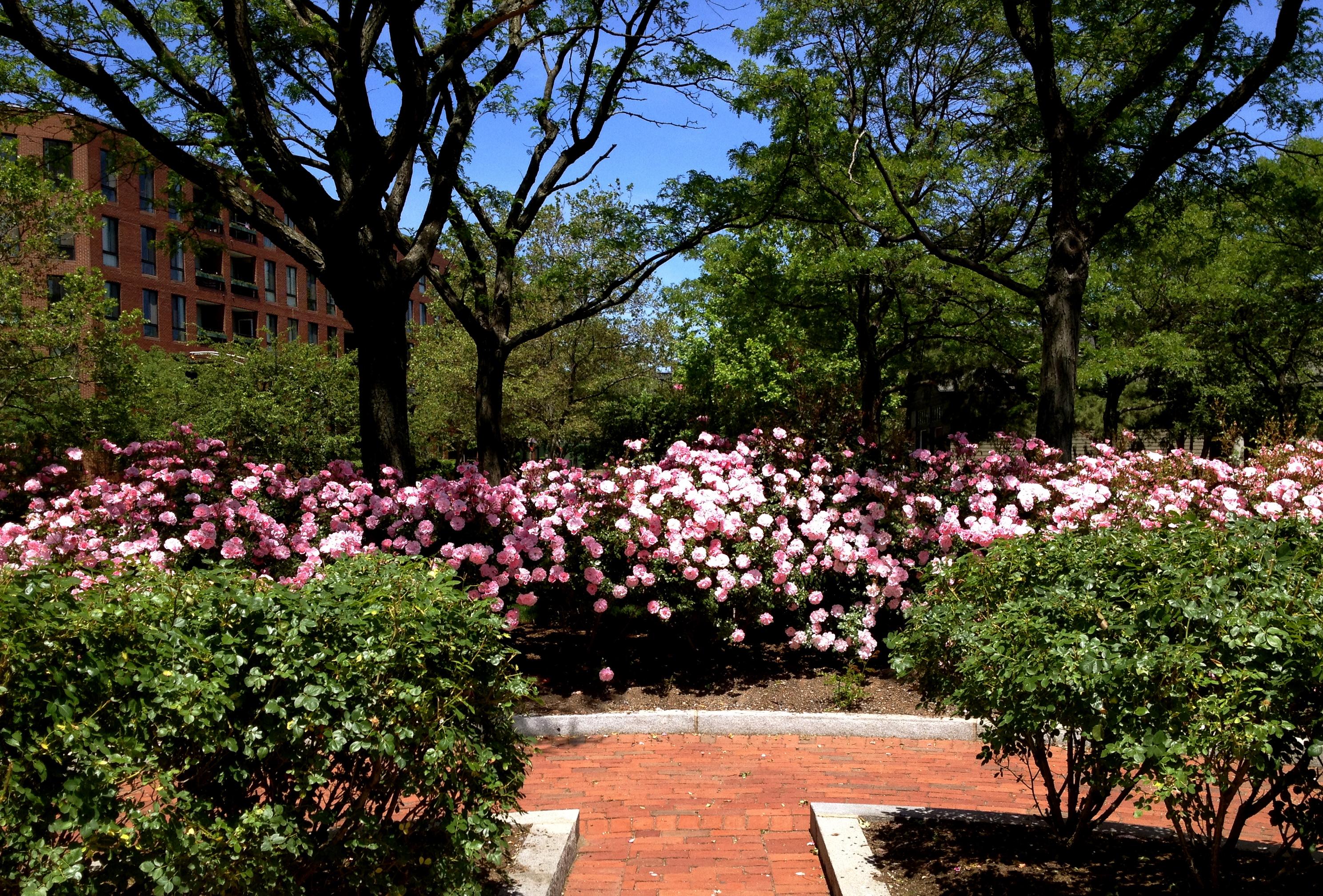 Two Boston Rose Gardens Landscape Notes