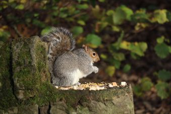 Squirrels - love them or loathe them