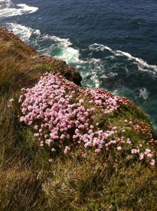 Flowers overlooking a sea cliff in Achill