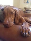 Sleepy Penny