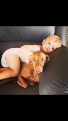 My cousin Knox and my Vizsla cousin Reagan.