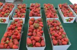 Strawberries at the Marin Farmer's Market