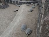 Tortoise Breeding Station .