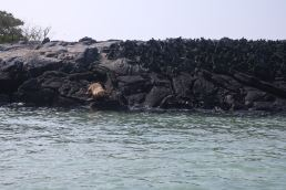 The piles of marine iguanas were impressive!