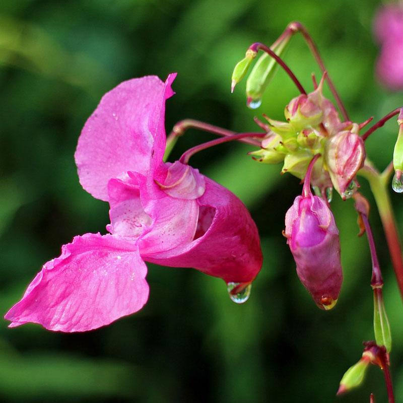 patricia-daza-terapeuta-flores-de-bach-soledad