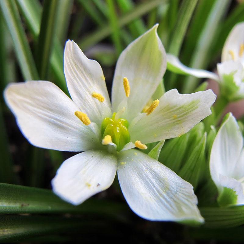 patricia-daza-terapeuta-flores-de-bach