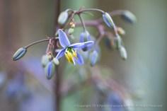 Blue Green & Yellow (II), 3.16.15