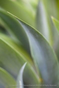 Unsharp: Green Leaves, 3.12.15