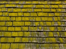 Shingles_With_Moss