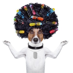 dog crazy hair 21377323_s