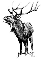 stag-roaring2_700