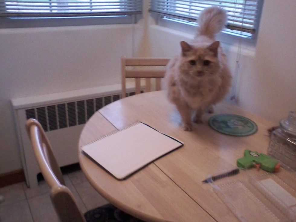 Montana, the fat cat