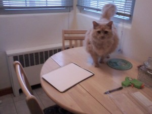 Writing table ready, under supervision of my cat,  Montana.