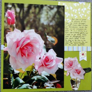 Large photo layout of roses