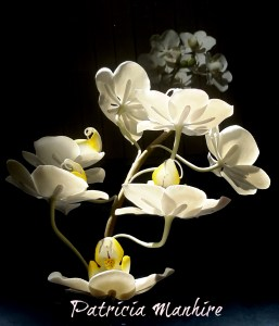 Sunkissed Orchids