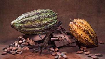 CACAU CHOCOLATE - Do Cacau Ao Chocolate
