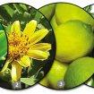 ingredientes do xampu shampoo - Substâncias naturais e suas finalidades (parte1)