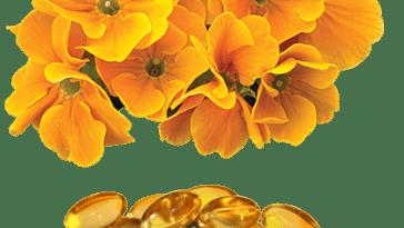 prod oleoprimula thumb - Benefícios do Óleo De Prímula Para a Saúde