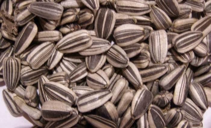 girassol - Semente de girassol emagrece, limpa o organismo e causa bem-estar
