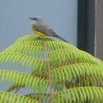 bird-on-fern-web