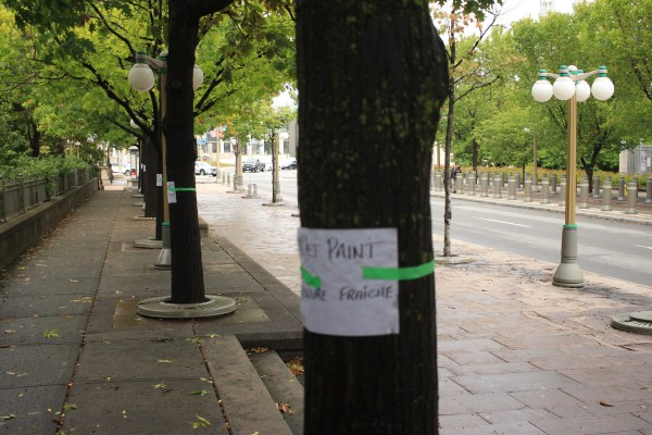 """Wet Paint"" signs on the trees"