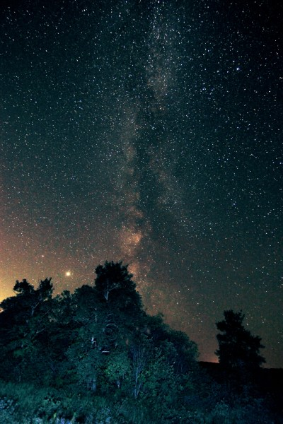 The Milky Way above an evergreen