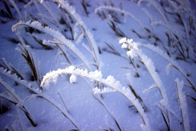 Frost on the grasses