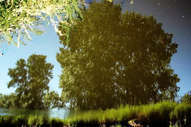 Trees reflected in the Little Saskatchewan River