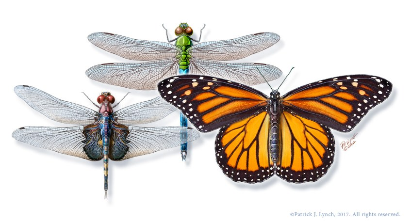 Migratory insects, Photoshop illustration. ©Patrick J. Lynch, 2017. All rights reserved.
