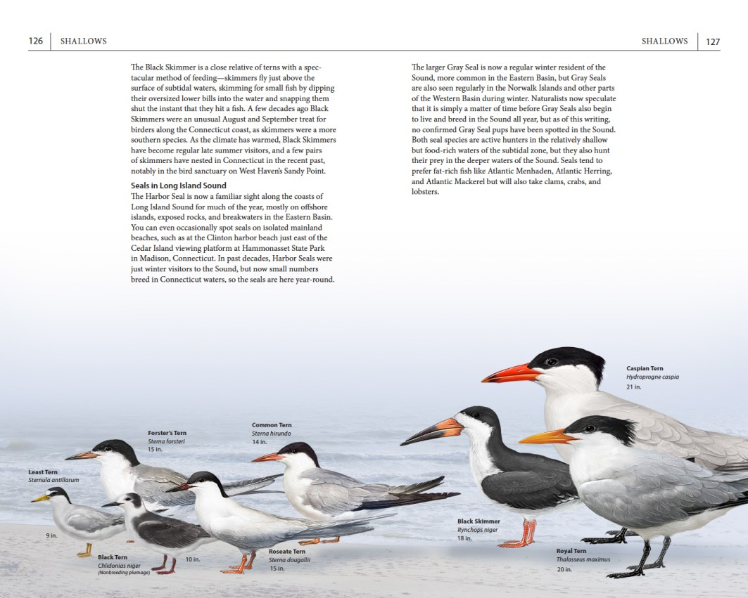 Page spread on tern species.