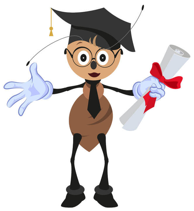 Ants teach wisdom image showing an ant holding a diploma